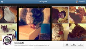 Instagram - U Szynszyla