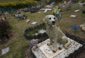 Colombia_Pet_Cemetery-2_t400