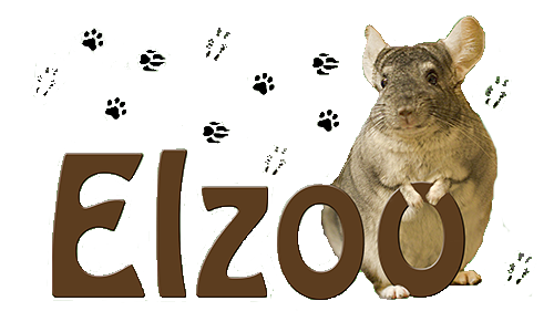 Elzoo.pl - U szynszyla - konkurs