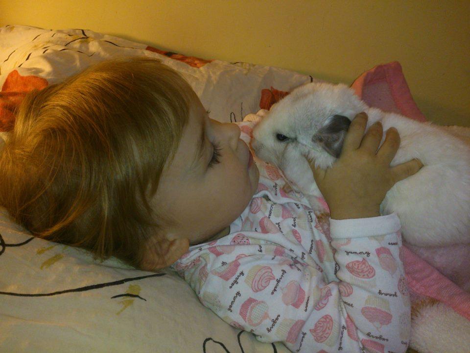 Dziecko bawi się z szynszylą - Córka Renaty