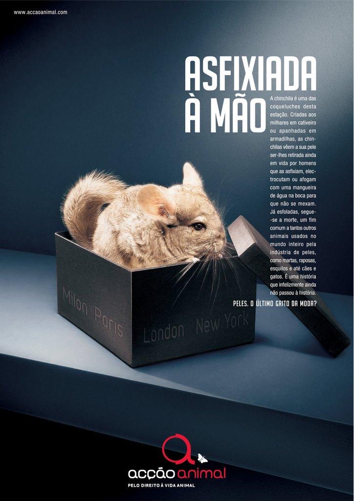 Szynszyla - akcja społeczna - poprawa życia zwierząt