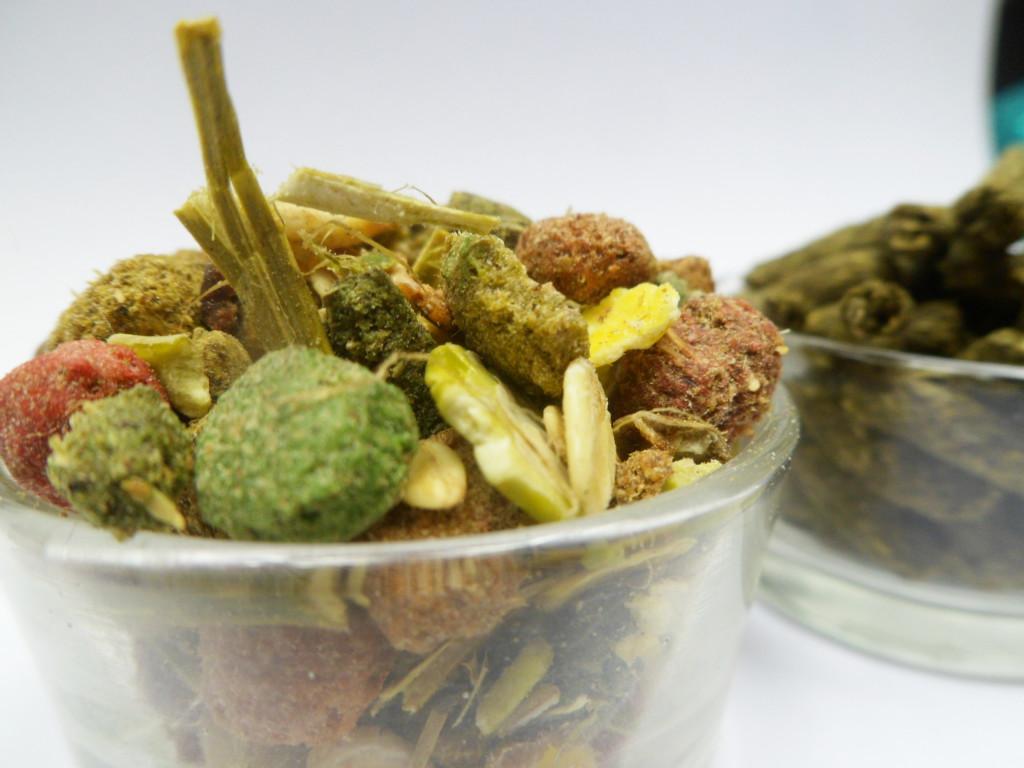 Dieta u szynszyli - jak zmienić karmę i kiedy najlepiej to zrobić?