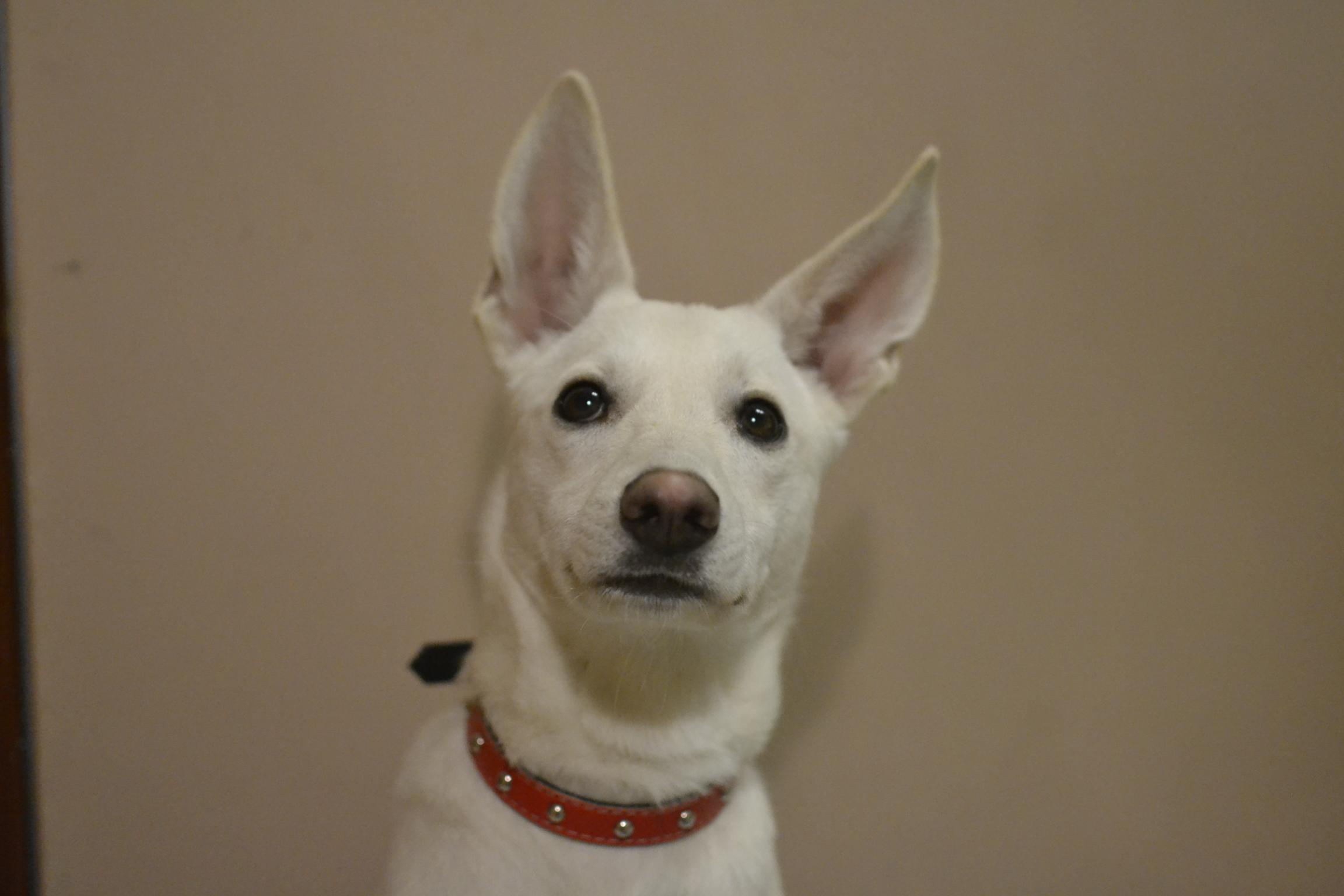 adopcja-psa-jak-adoptowac-psa