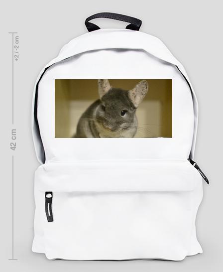 prezent pod choinkę dla zwierzoluba - blog o szynszylach