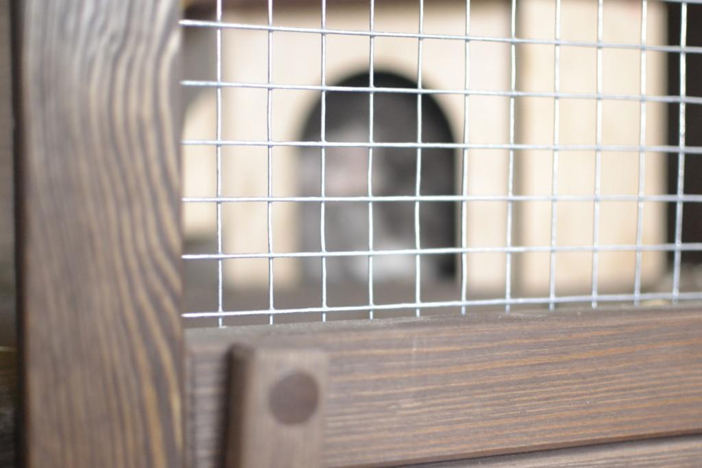 drewniana woliera dla szynszyli - blog o szynszylach - woliery na zamowienie