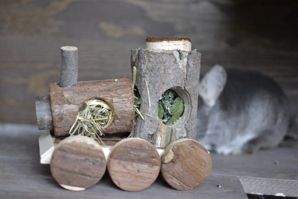 drewniane zabawki dla szynszyli - sklep hipcio blog o szynszylach