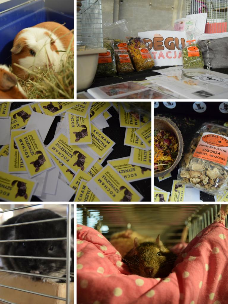 wystawa szynszyli - zoobotanica - blog o szynszylach