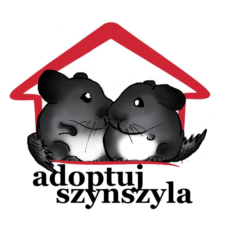 Adoptuj Szynszyla