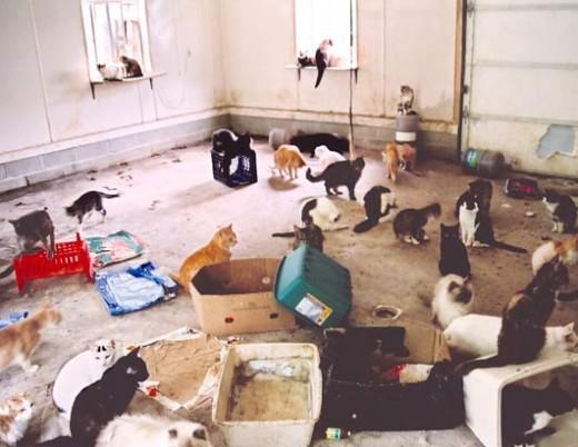 U Szynszyla - zbieracze zwierząt