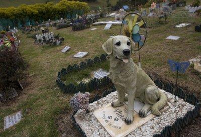 Znalezione obrazy dla zapytania cmentarz dla zwierząt warszawa
