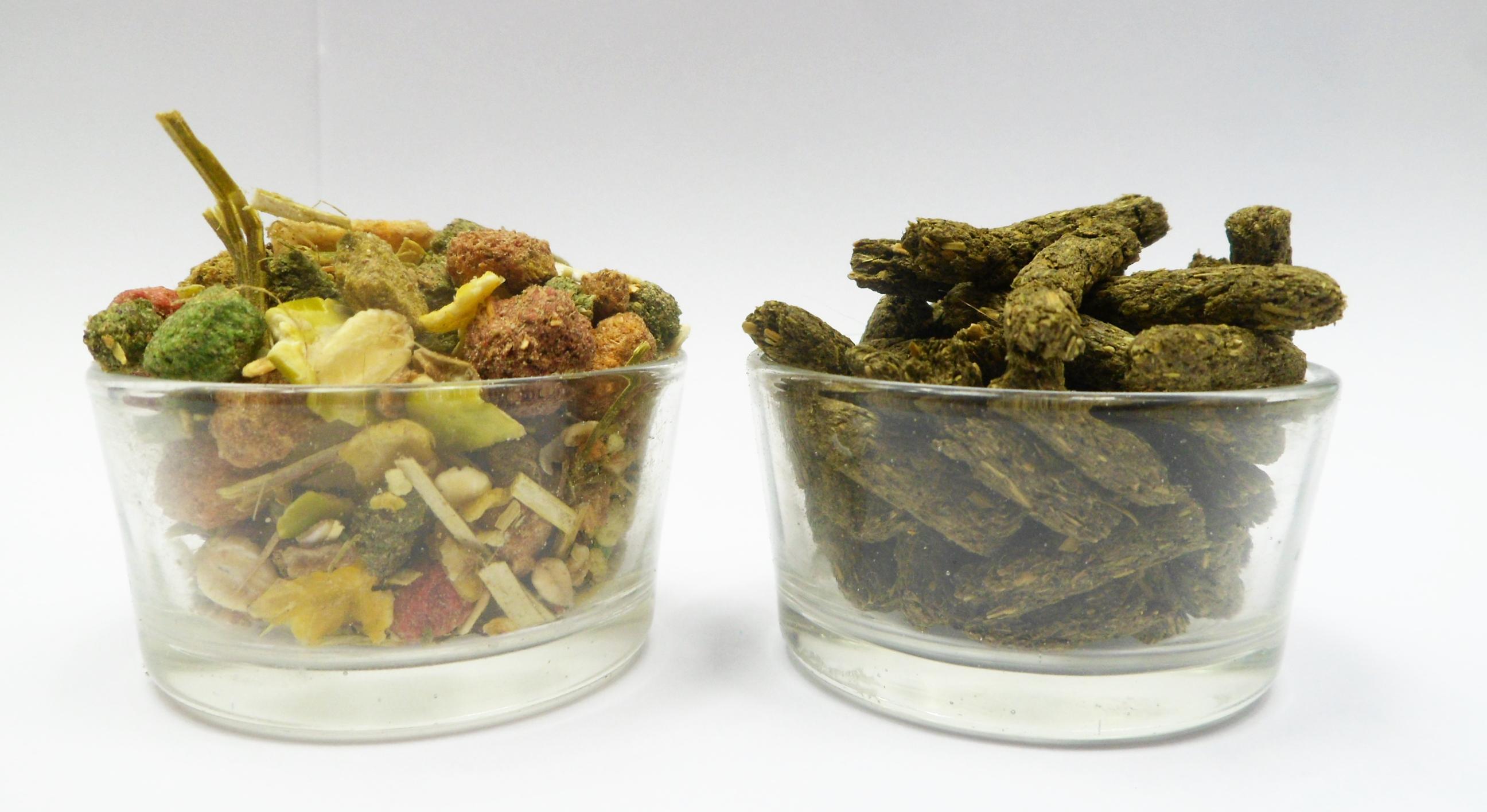 Dieta u szynszyli - jak zmienić karmę i kiedy warto to zrobić?