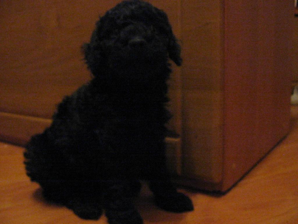karma dla psa - sklep internetowy 4dogcat.pl