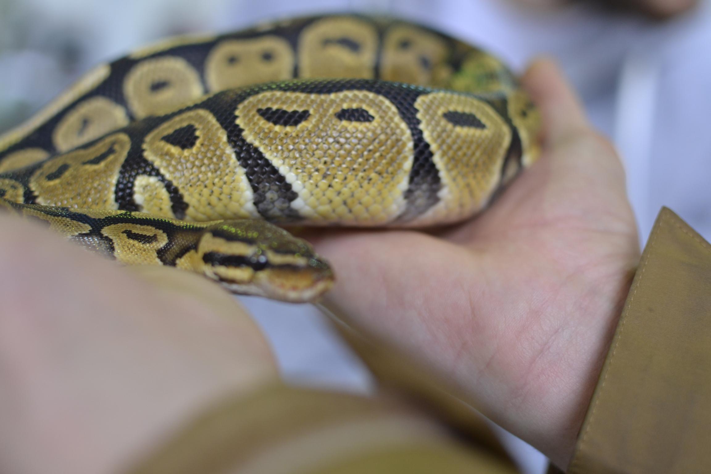 aqua&zoo wystawa zwierząt egzotycznych szynszyle