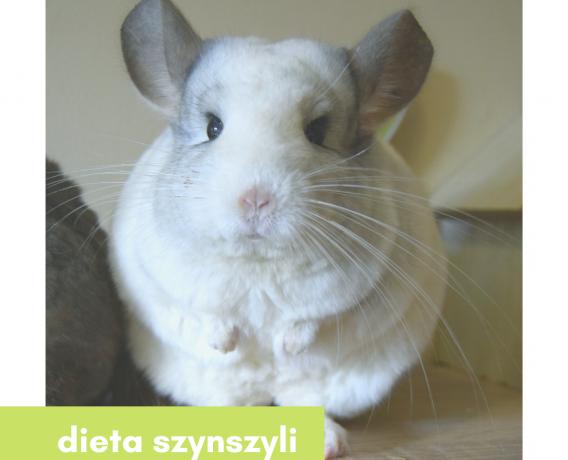 Zielnik_szynszyli_dieta_szynszyli